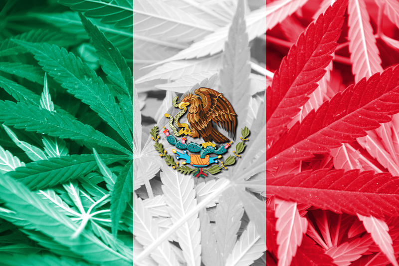 Mexico's Supreme Court Rules Cannabis Prohibition Unconstitutional